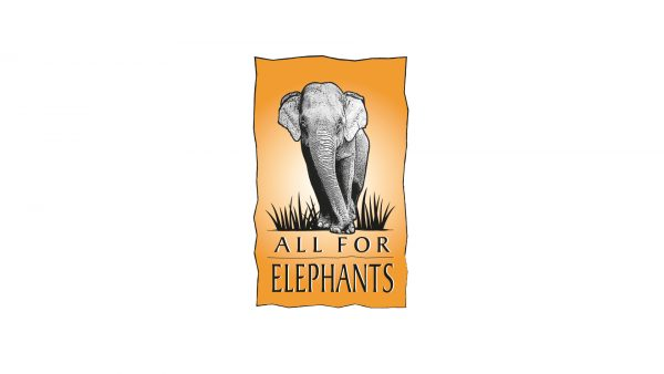 All For Elephants Non Profit Animal Rights Group